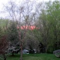 The view from my office window in spring