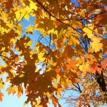 Fall Leaves Photo Gallery