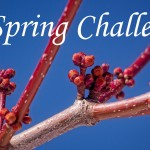 A Spring Challenge