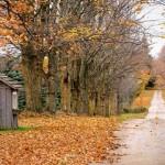 Autumn Adventures in Blogging