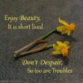 Enjoy Beauty Flowers