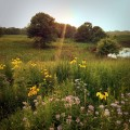 Setting sun over native prairie