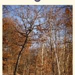 A Walk in the Winter Woods: Part I